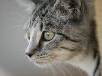 Besøg Kattens Værn i efterårsferien